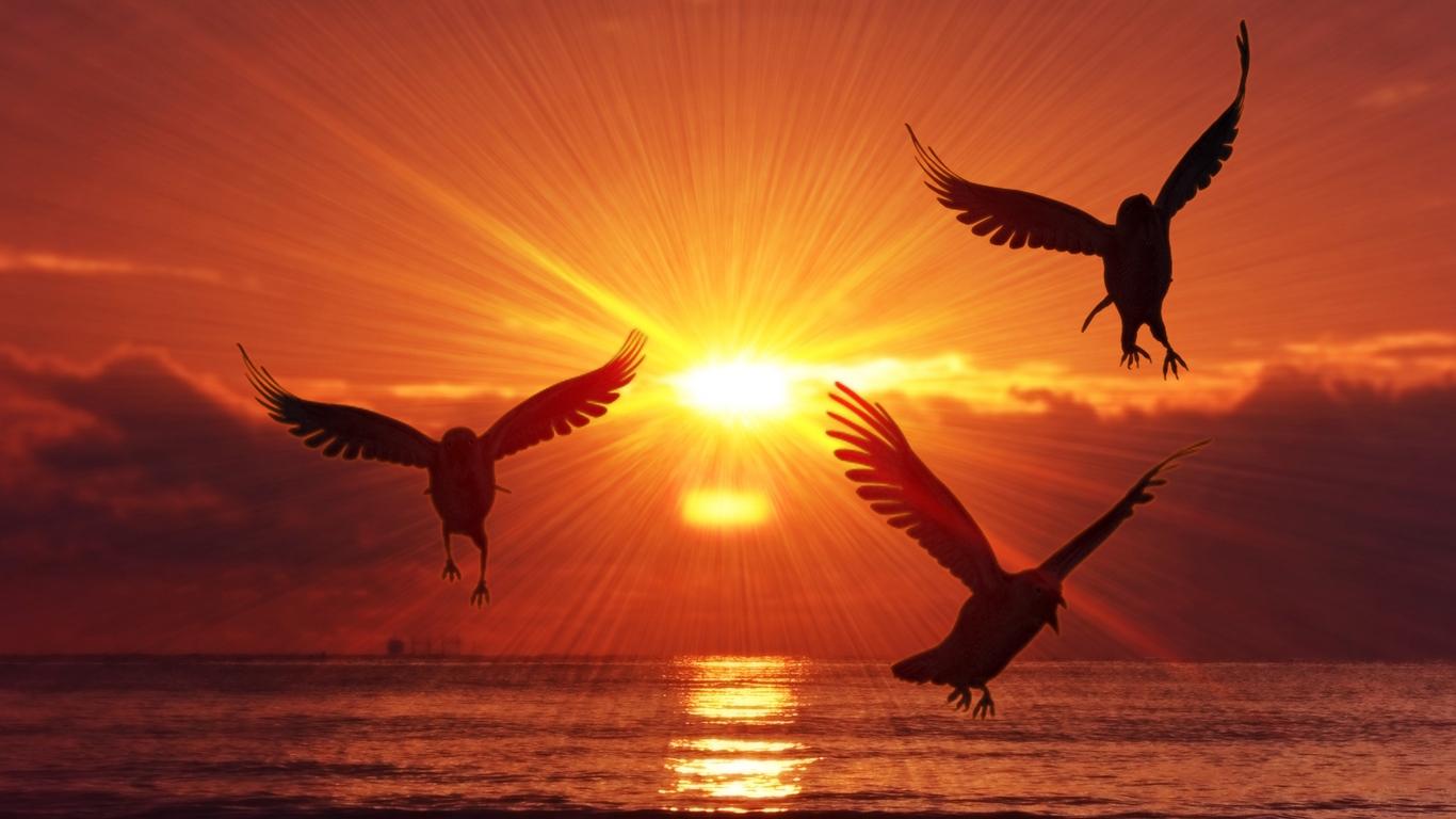 phoenix symbolism